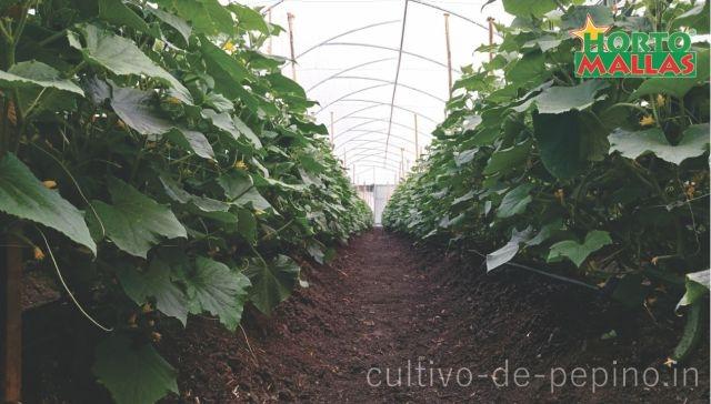 Cultivo de vegetales con malla protectora
