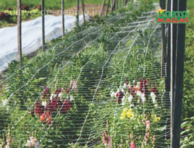 cuiltivo de flores entutoradas horizontalmente con malla