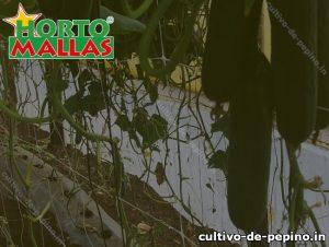 Malla tutora colocada en campo de cultivo